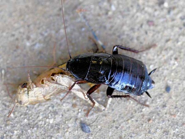 Residential All Gone Services Dallas Area Pest Control